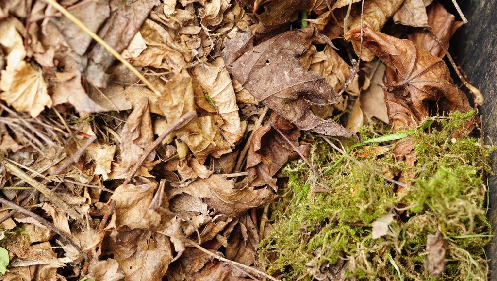 Tipps zur Biotonne im Herbst – im Blog von #WIRFUERBIO